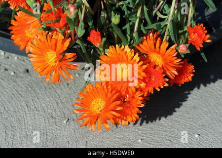a vibrant orange succulent plant in the garden of casa