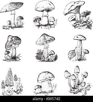 Amanita mushroom illustration, drawing, engraving, line