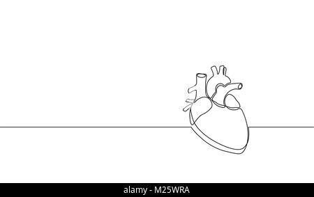 Human Vascular System Diagram Human Ovary Diagram Wiring