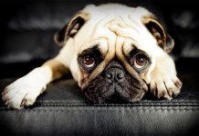 Dog's Anxiety