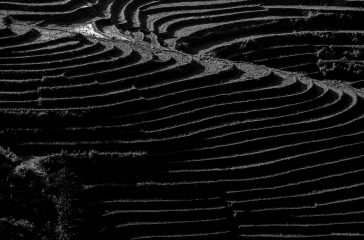 Curves And Lines Of Sapa Landscapes