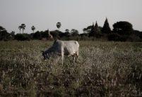 Landscapes of Bagan