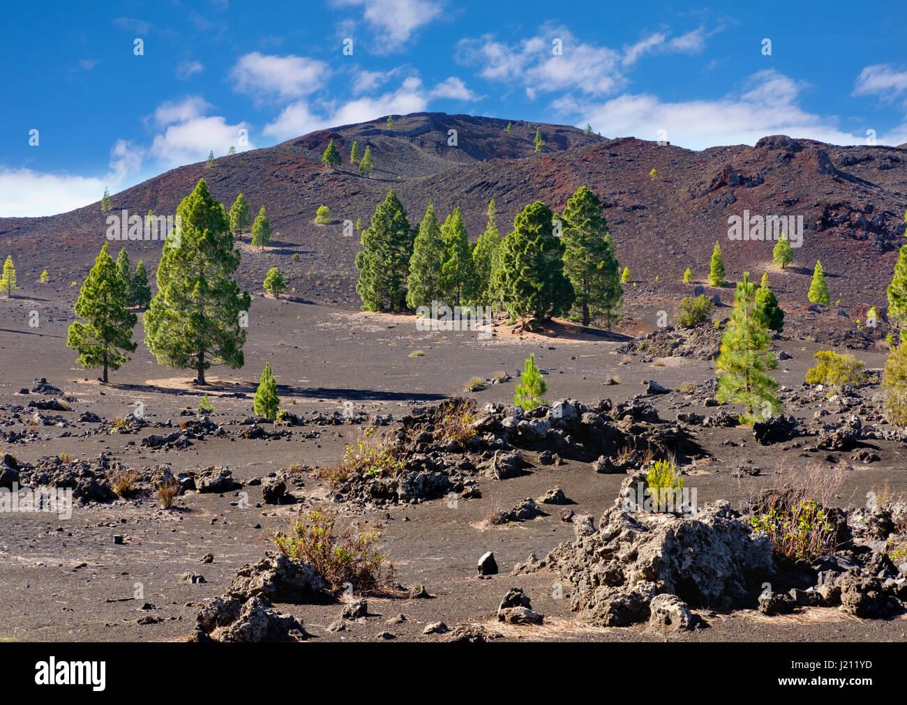 7pines teneriffa 3 pin plug wiring diagram montana negra stock photos and images