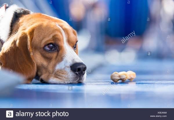 Dog Chew Stock & - Alamy