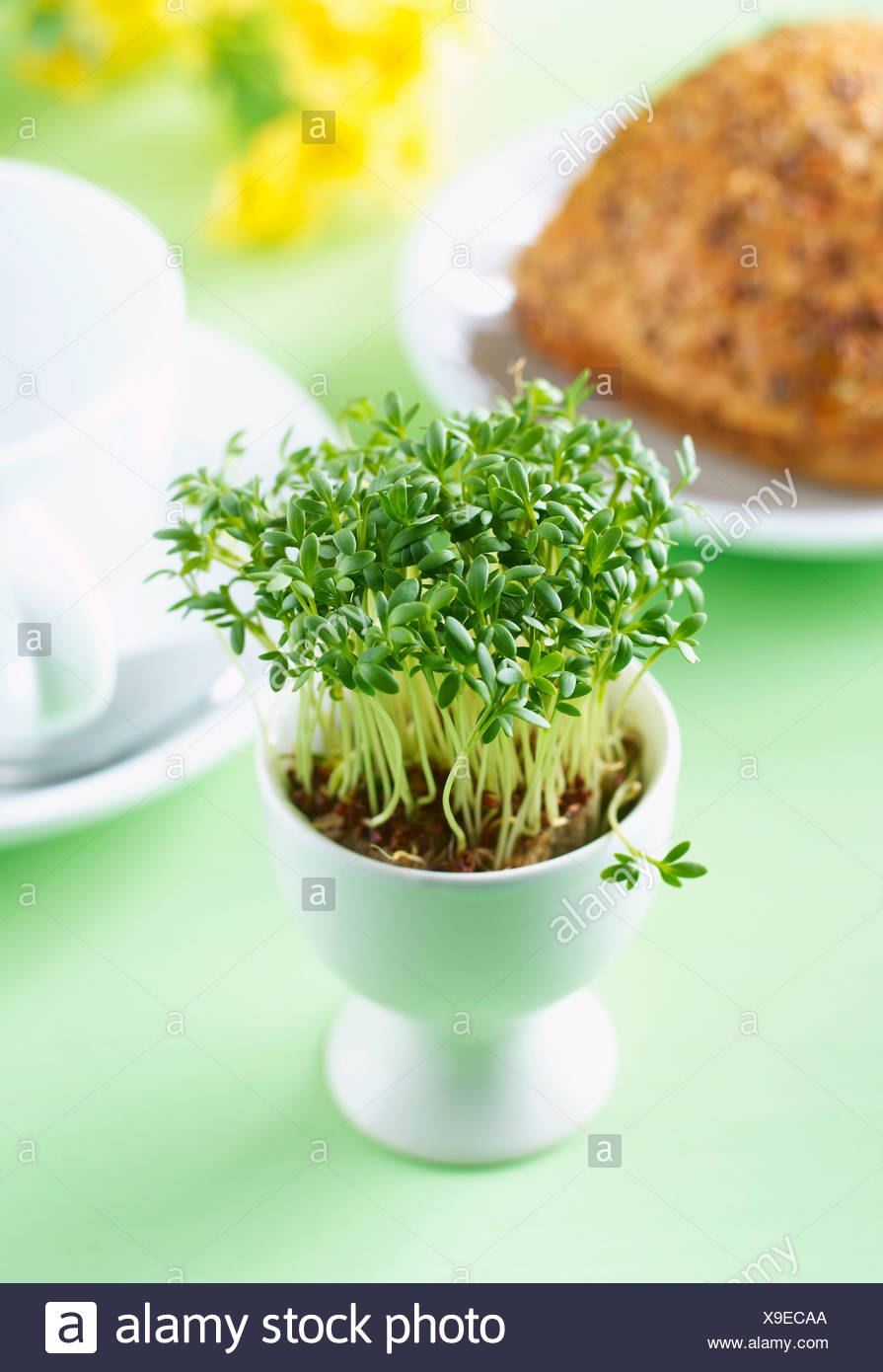 Cress Plant Stock Photos Amp Cress Plant Stock Images Alamy