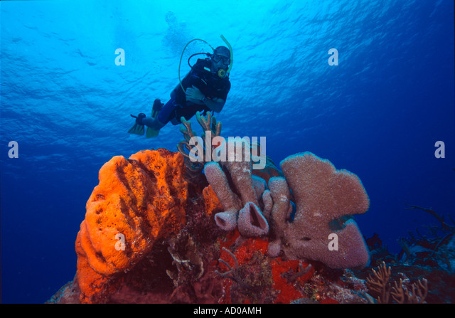 Liberty Seas Shrimp