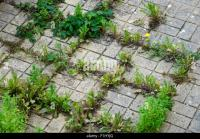 Weeds In Cracks Stock Photos & Weeds In Cracks Stock
