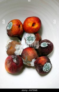 Rotten Moldy Peaches Stock Photos & Rotten Moldy Peaches