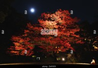 Garden Moon Night Stock Photos & Garden Moon Night Stock ...