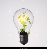 Bulb Plants Stock Photos & Bulb Plants Stock Images - Alamy