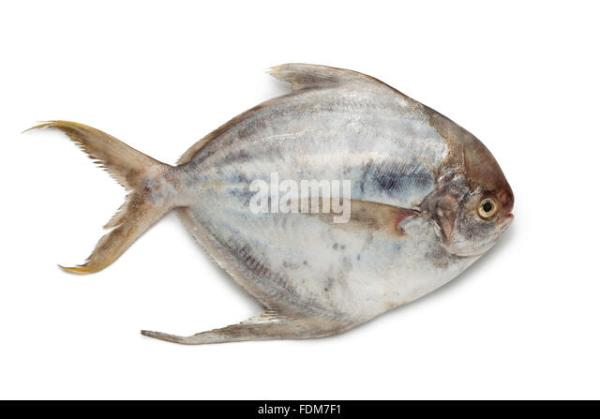 Butterfish Stock Photos Butterfish Stock Images Alamy