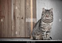 Muschi Stock Photos & Muschi Stock Images - Alamy