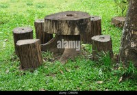 Tree Stump Chair Stock Photos & Tree Stump Chair Stock ...