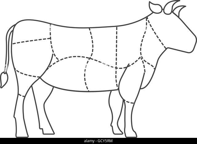 Scottish Highland Cow Stock Photo
