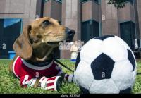Melbourne Dog Dogs Stock Photos & Melbourne Dog Dogs Stock ...