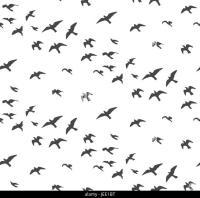 Seagulls Silhouettes Stock Photos & Seagulls Silhouettes ...