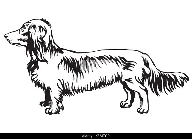 Vector Image Of An Dog Dachshund Stock Vector