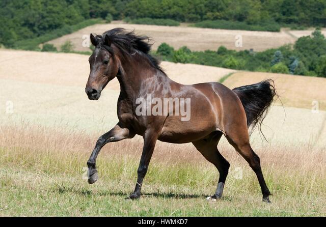 Oldenburg Horse Carriage