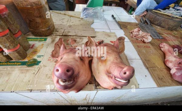 Pigs For Sale Stock Photos amp Pigs For Sale Stock Images
