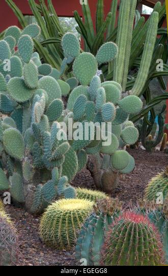 Cactus Display Stock Photos  Cactus Display Stock Images