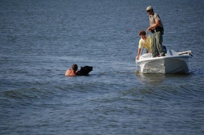 Фото спасение медведя