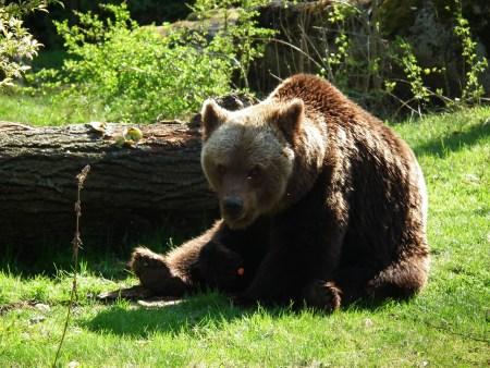Делить шкуру неубитого медведя - пословица