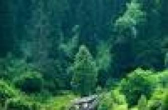 каком расстоянии сажать картошку друг от друга