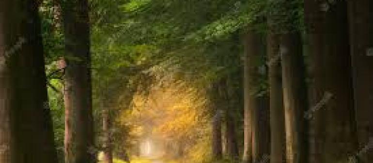 дельфины, факты, интересные факты