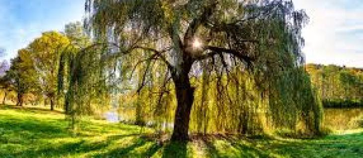 избавляемся от колорадского жука навсегда