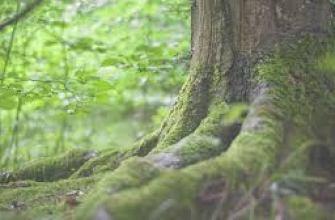 польза лимона