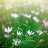 факты про санкт петербург