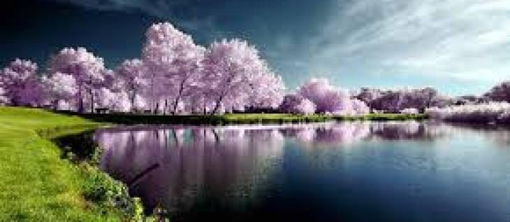 Много оправданных и неоправданных слухов ходит о различных вариантах похудения.