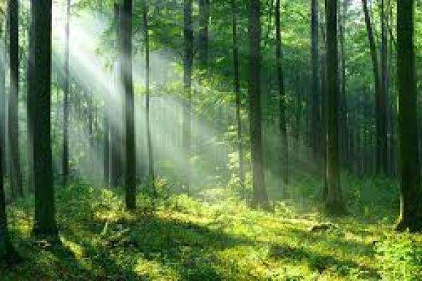 вред диеты для организма