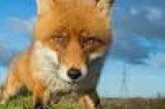 Факты из жизни кошек