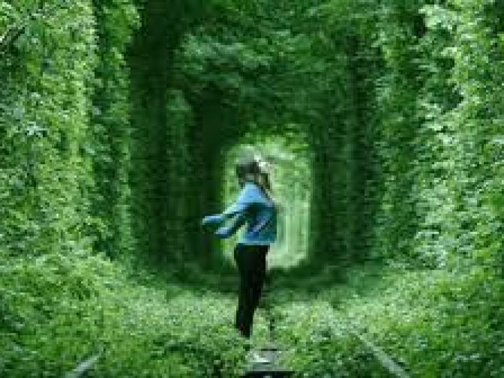 оливковое масло для еды, секреты оливкового масла