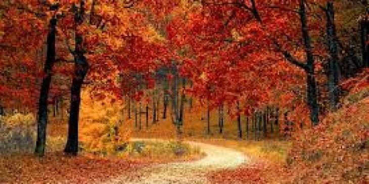 гоа самые хорошие отели, отели на гоа самые лучшие