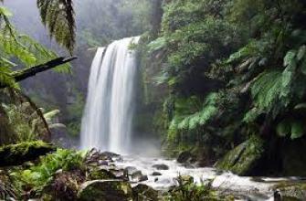 белый чай свойства, белый чай как правильно заваривать, белый чай как заваривать