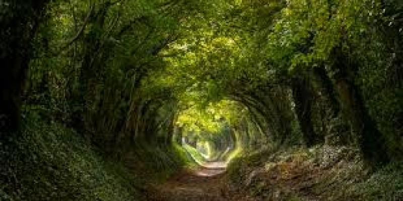 какой лучше чай для похудения, какой лучше чай пить для похудения, какой чай пить чтобы уснуть