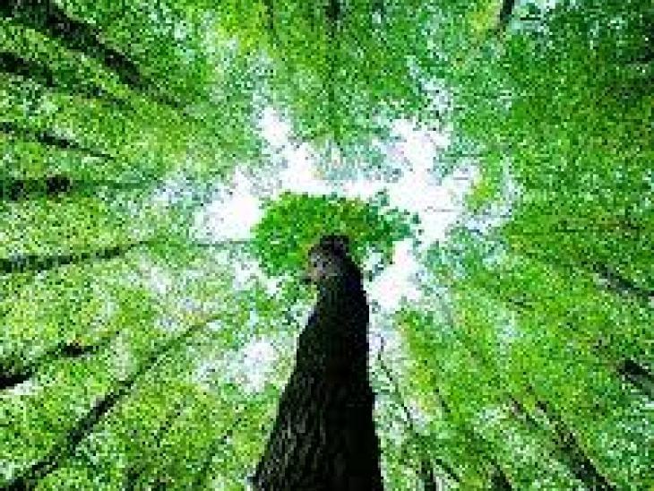 тараканы в квартире как быстро избавиться, как быстро и навсегда избавиться от тараканов в квартире, способы избавиться от тараканов