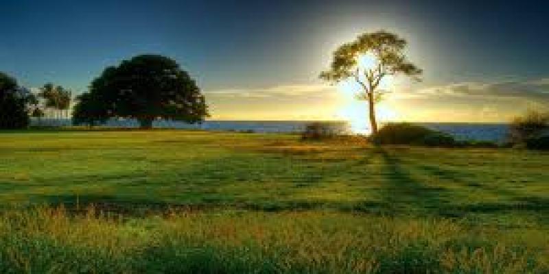 препараты для профилактики простуды, профилактика гриппа и простуды препараты, народные средства для профилактики простуды