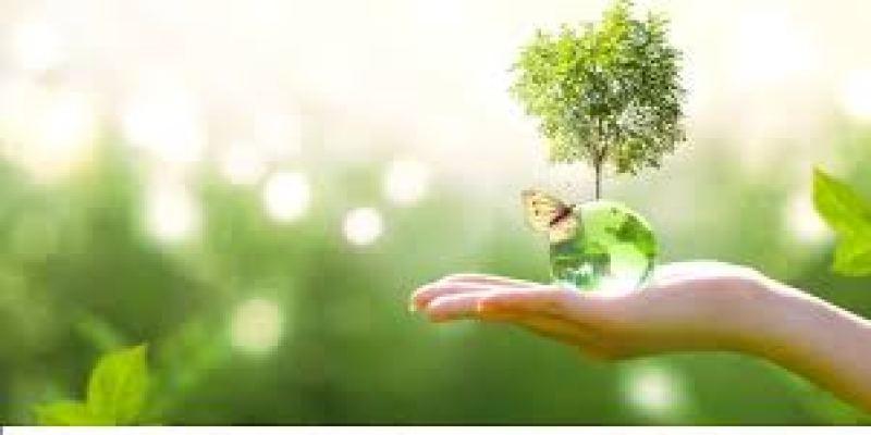 хлебная диета, хлебная диета для похудения