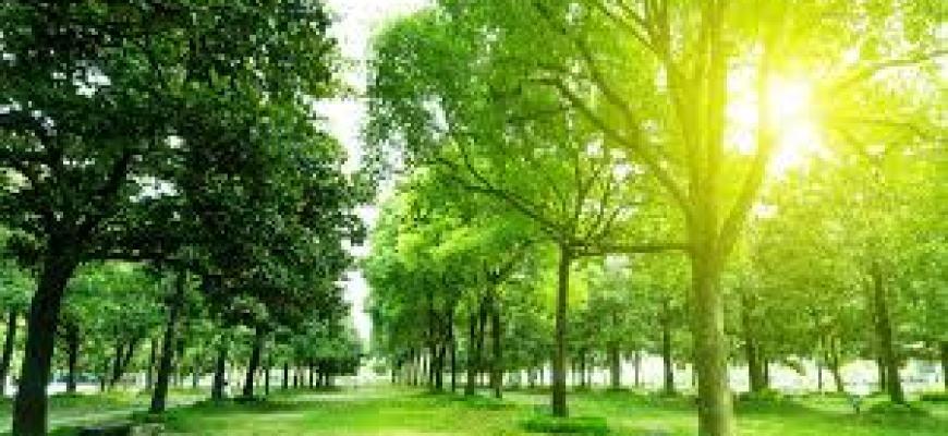 аэробные упражнения, польза бега для мозга