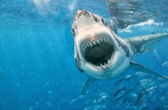желудок акулы, находки в желудках акул