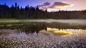 большие бабочки виды, махаон, размер бабочки насекомое, крылья