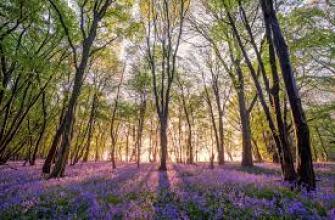 сделать татуировку, как, временную, можно
