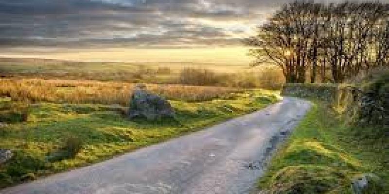 как выбрать вкусный чай, китайский, марки, заварной