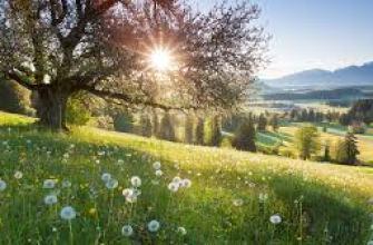 золотое кольцо с рубином, мужское, женское, серебро