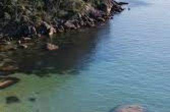 мифы о выживании