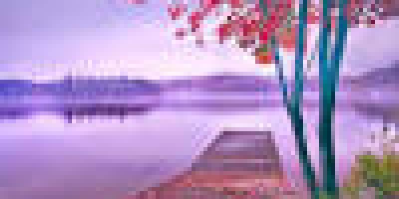 польза и вред абрикосов для организма, человека, абрикосовый