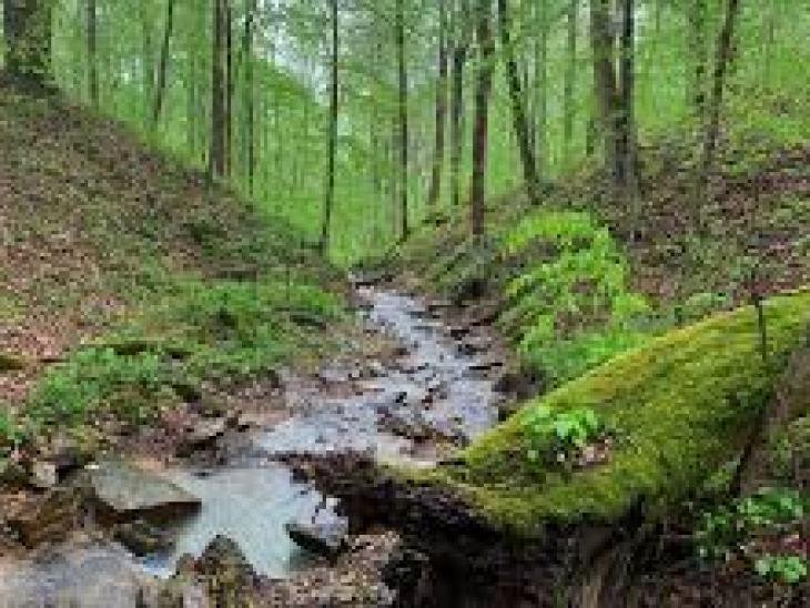 огранка ювелирных камней, обработка, минерал, вид, работа, камень